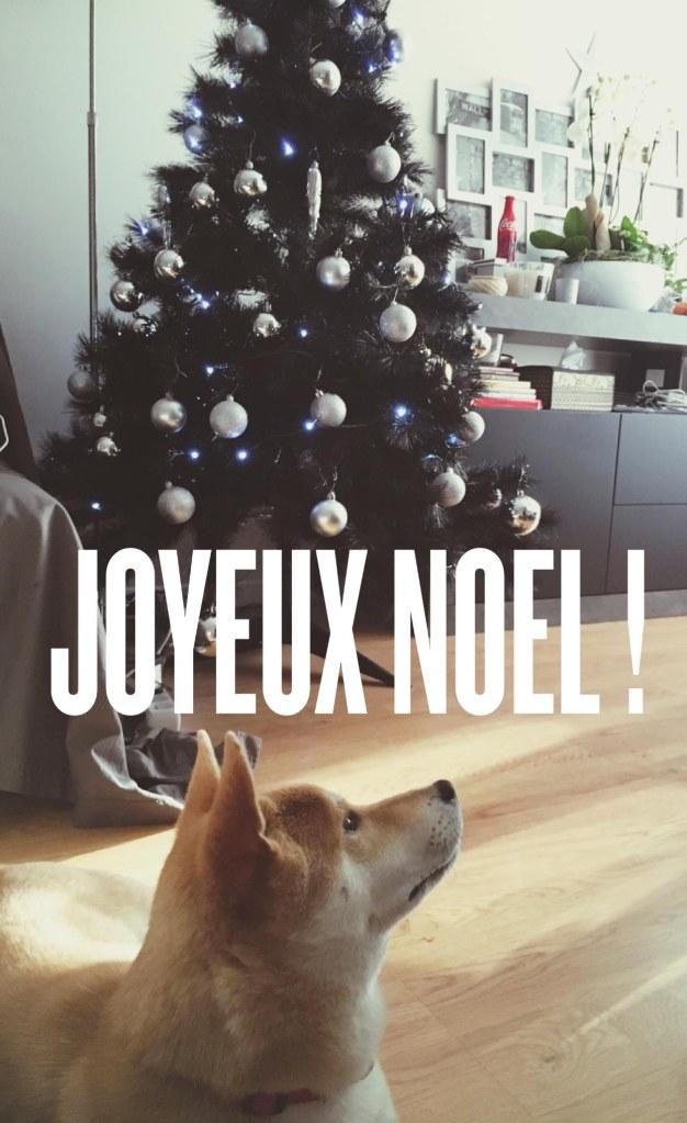 Joyeux Noël blog dog Kenzo