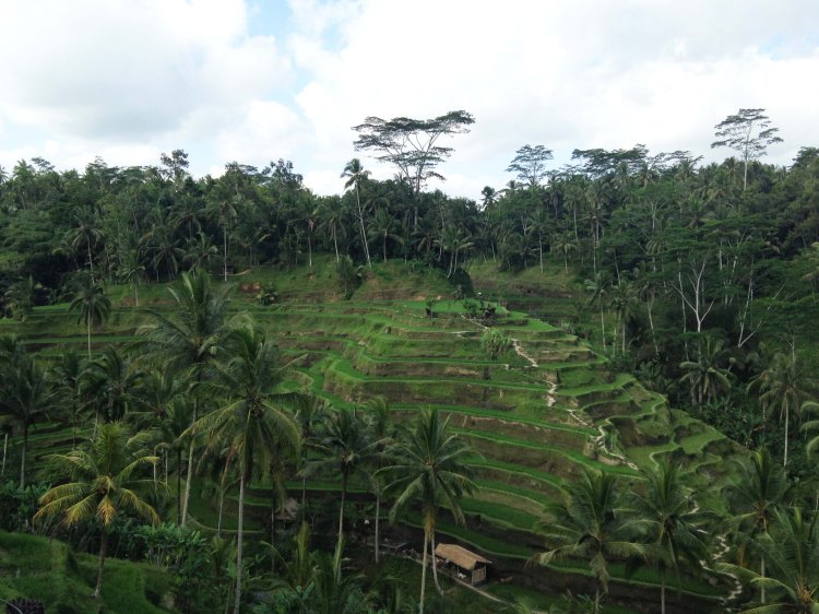 Rizière en terrasses Ubud Bali Pura Bali avis