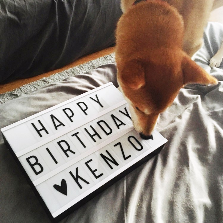 Light Box Happy Birthday Kenzo Shiba Inu Blog France